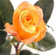 Wholesale Flowers Miami Usa Wholesale Roses Miami Wholesale Florist Flowers Roses Miami