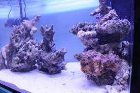 Live Rock Aquascaping Ideas Aquascaping Show Your Skills Reef Central Online Community
