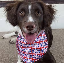 union jack dog bandana pet calming neckachief cat