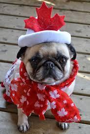 halloween pet background the 25 best best dog costumes ideas on pinterest best dog