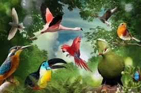 birds of eden free flight sanctuary plettenberg bay south africa