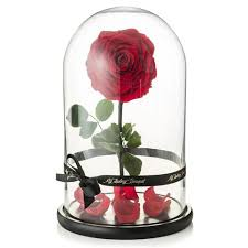enchanted rose that lasts a year you can now buy a beauty and the beast rose that lasts a year
