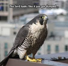Meme Bird - sad bird meme by soydolphin memedroid