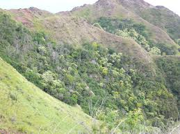Hawaii vegetaion images Tropical dry forests of the pacific hawaii jpg