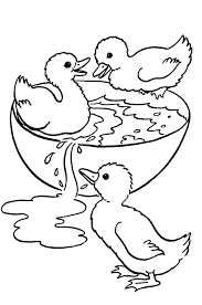 drawn duckling coloring book pencil and in color drawn duckling