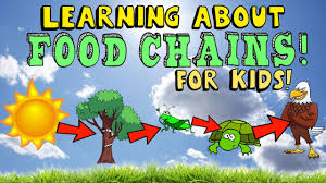 learning about food chains youtube
