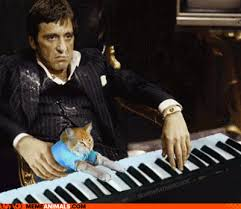 Cat Playing Piano Meme - the scarface project tony playing the piano with a cat