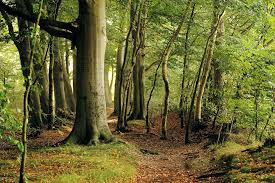 free photo beech tree forest late summer free image on