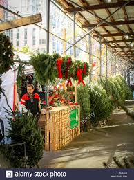 selling trees on the in new york city stock
