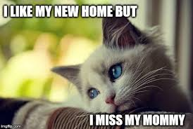 New Home Meme - first world problems cat meme imgflip