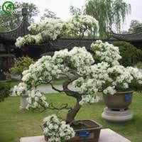 dropshipping bonsai tree wholesalers uk free uk delivery on