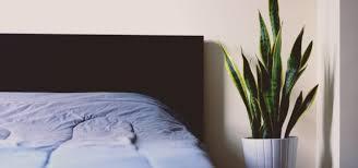 pflanzen für schlafzimmer pflanzen im schlafzimmer so hast du einen gesunden schlaf utopia de