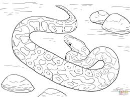 ball python download coloring page animal photos of realistic
