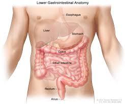 gastrointestinal complications pdq u2014patient version national