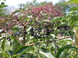 native tennessee plants fruits and seeds