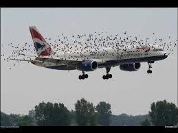 best aviation photography authorstream