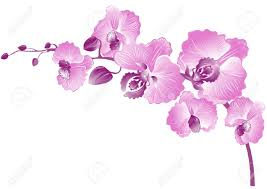 purple orchids elegance branch of purple orchids vector illustration royalty