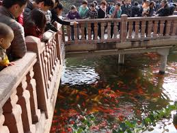 the secrets of yuyuan garden the shanghai experience