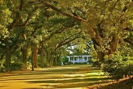 Alabama scenery images The 10 most scenic drives in alabama jpg