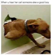 Best Dog Memes - the 100 best dog memes ever dog memes memes and humor