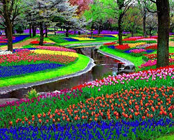 incredible flower garden in amsterdam flower garden in amsterdam