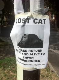 Missing Cat Meme - 22 hilarious and disturbing missing cat posters