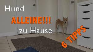 Haus E Hund Kann Nicht Alleine Zu Hause Bleiben 6 Tipps Wie Du Das