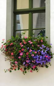 Window Sill Planter by 172 Best Windowsill Boxes Images On Pinterest Window Boxes
