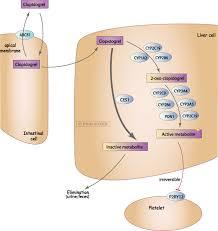 pharmacogenetics and cardiovascular disease u2014implications for
