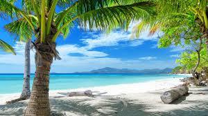 Palm Tree Wallpaper Hd Beach Wallpaper Find Best Latest Hd Beach Wallpaper In Hd For