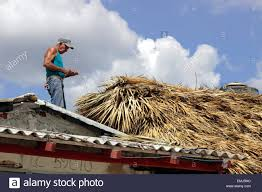 elderly man works on a straw roof of a beach house on the beach at