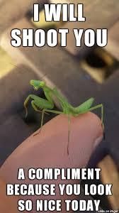 Mantis Meme - innocent praying mantis album on imgur