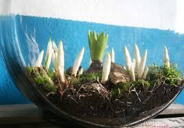 spring flowers and moss mini indoor garden u2013 modewaerts