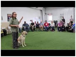 The No 1 Lucky Dog Training Mistake You re Making and 4 Ways to