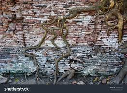 tree roots brick walls stock photo 101582407 shutterstock
