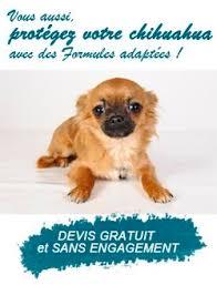 toilettage de l affenpinscher best 25 assurance chien ideas on pinterest vétérinaires