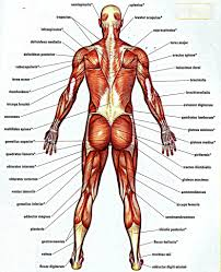 Anatomy And Physiology Online Quizzes Human Anatomy And Physiology Test Periodic Tables