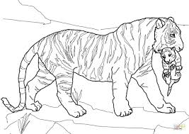 coloring pages tiger coloring pages for free tiger coloring