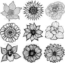 black and white pictures of flowers to draw collection 66