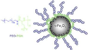sketch of the polymer coated maghemite nanoparticles and poly