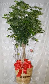 funeral plants funeral plants same day delivery on funeral plants and flowers