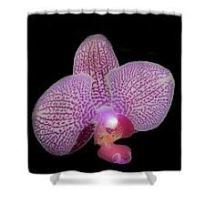Orchid Shower Curtain Richard Goldman Shower Curtains For Sale