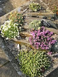19 february 2016 kent alpine gardener u0027s diary gardeners