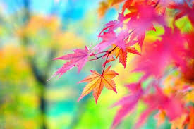 fall colors wallpaper background