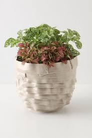 native plants at csu dominguez 95 best ceramic art images on pinterest diy art studios and bowls