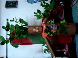 banyan tree in fancy dress competition youtube