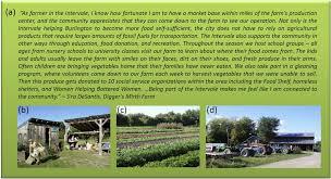 Types Of Urban Gardening Sustainability Free Full Text Multifunctional Urban