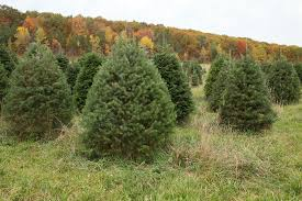 the hober tree farm