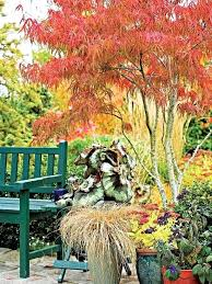best small flowering trees australia best small garden trees