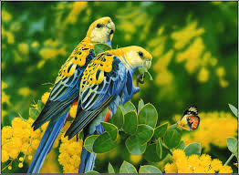 bird wallpapers 55 cute love bird colorful parrot hd wallpapers download